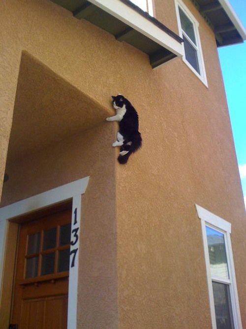 27-Reasons-You-Cant-Trust-Cats06