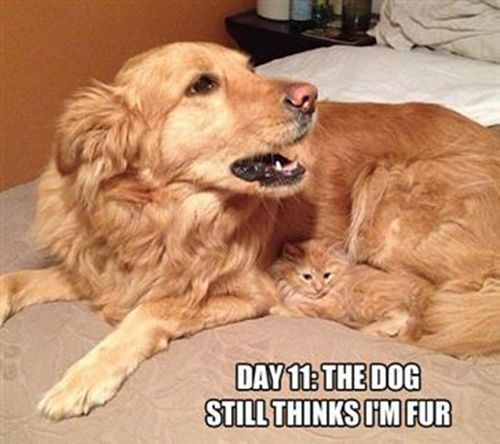 27-Reasons-You-Cant-Trust-Cats15