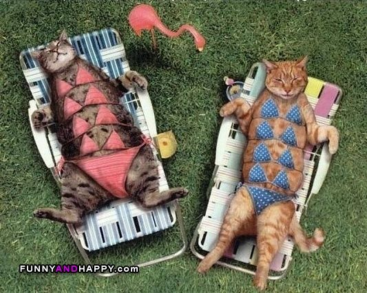 Funny cats in swimsuit tan