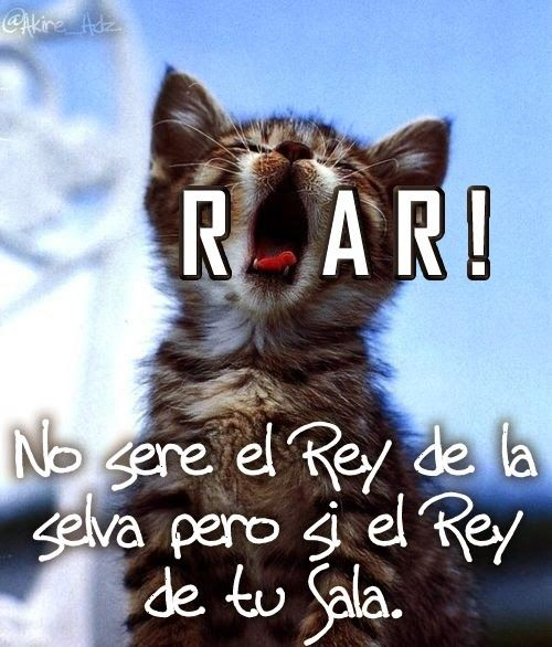 gatito roar2-PM